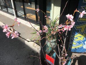 コムネットの桜