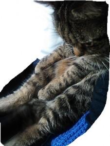 2月19日猫