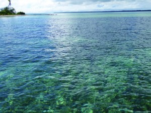 トンガモズクが自生する海