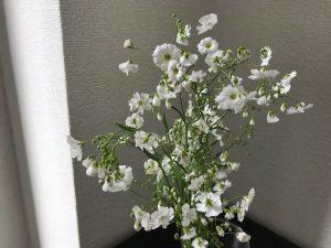 コムネットに飾ったカスミ草