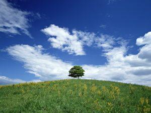 青空の下の大きな木