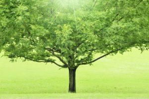 1本の大きな木